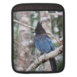 Steller's Jay Sleeves For iPads