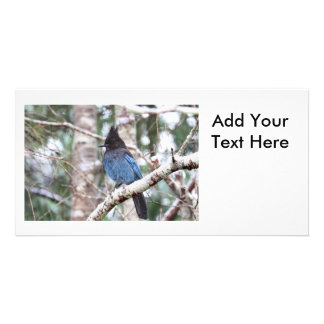 Steller's Jay Photo Card Template
