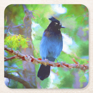 Steller's Jay Square Paper Coaster