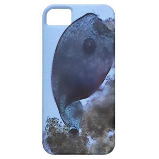 Stentor iPhone SE/5/5s Case