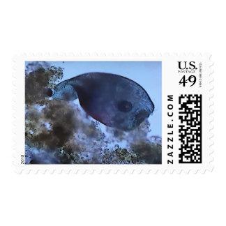 Stentor Stamp