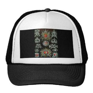 Stephoidea Trucker Hat