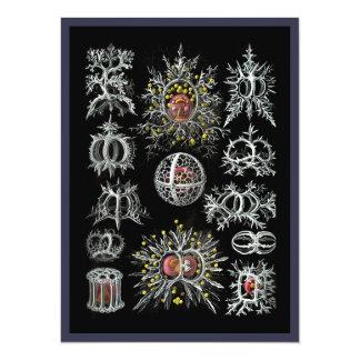 Stephoidea on Black Background Card