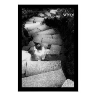 Steping Stairs cat Poster