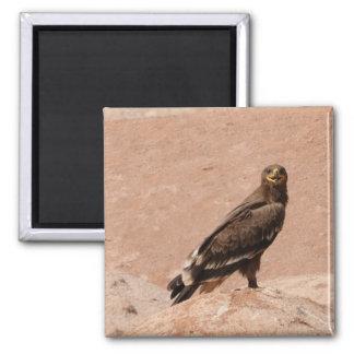 Steppe Eagle, Aquila nipalensis, Steppenadler 2 Inch Square Magnet