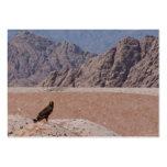 Steppe Eagle, Aquila nipalensis, Steppenadler Business Card