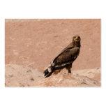 Steppe Eagle, Aquila nipalensis, Steppenadler Business Card Templates