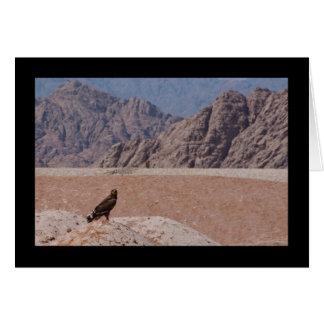 Steppe Eagle, Aquila nipalensis, Steppenadler Card