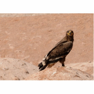 Steppe Eagle, Aquila nipalensis, Steppenadler Photo Cutout