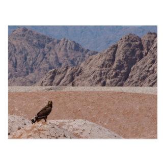 Steppe Eagle, Aquila nipalensis, Steppenadler Postcard