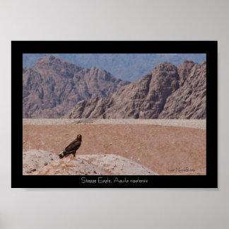 Steppe Eagle, Aquila nipalensis, Steppenadler Posters