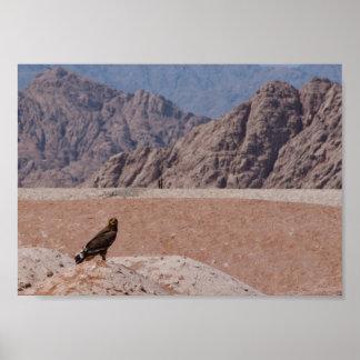 Steppe Eagle, Aquila nipalensis, Steppenadler Print