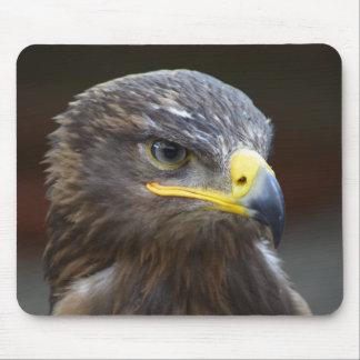 Steppe Eagle Close-Up Portrait Mousepad