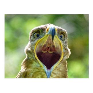 Steppe Eagle Head 001 2.1 Postcard