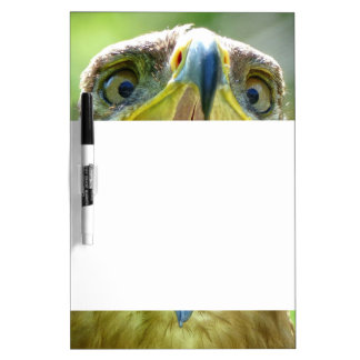 Steppe Eagle Head 001 2.3.4 Dry Erase Board