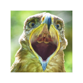 Steppe Eagle Head 001 7.0, screaming Canvas Print