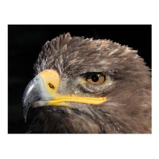 Steppe Eagle Postcard