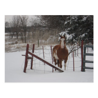 Stepper In The Snow Postcards
