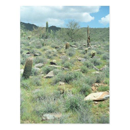 Stepping Stones Sonoran Arizona Photo Postcard