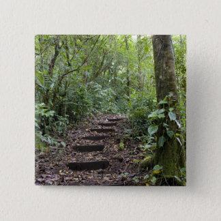Steps ascending on path. Tropical Cloud Forest Button