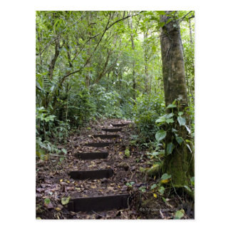Steps ascending on path. Tropical Cloud Forest Postcard