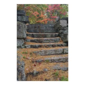 Steps covered in pine needles, White Mountain Photo Print