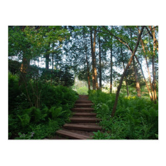 Steps on a Nature Walk Postcard