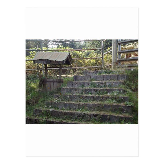 Steps Postcard