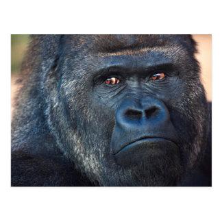 Stern Gorilla Face Postcard