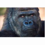 """Stern Gorilla Face Statuette<br><div class=""""desc"""">Closeup photo of a stern looking gorilla. Don&#39;t get on this guy&#39;s bad side</div>"""