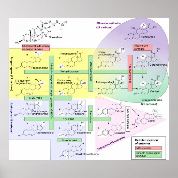 steroidogenesis inhibitors