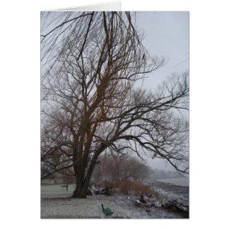 Stewart Park, Cayuga Lake Card