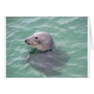 Sti Ives Seal Card