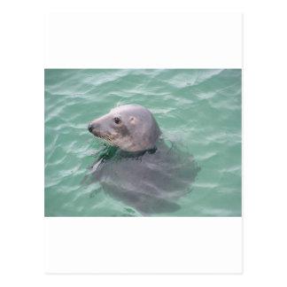 Sti Ives Seal Postcard