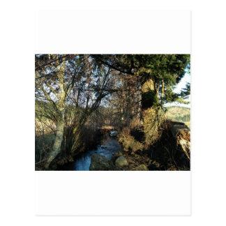 Stick and Stream Postcard