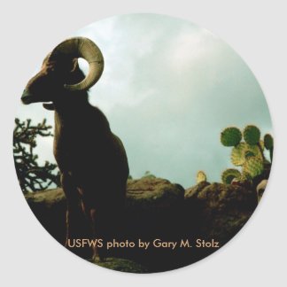 Sticker / Arizona Bighorn Sheep