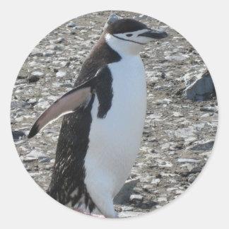 Sticker: Chinstrap Penguin Classic Round Sticker