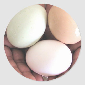 Sticker Eggs Nested in Hands Photo Art
