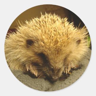 """sticker """"hedgehog"""""""