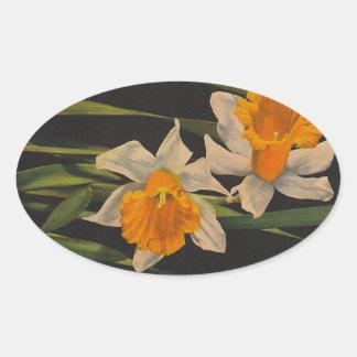 Sticker Jonquil Night Flowers Daffodils Gardening