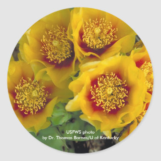 Sticker / Prickley Pear Cactus Blooms