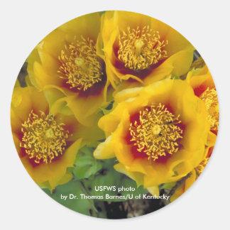 Sticker Prickley Pear Cactus Blooms