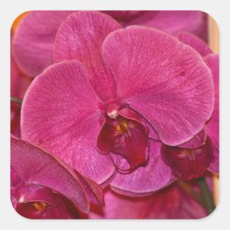 Sticker, Purple Moth Orchid Square Sticker
