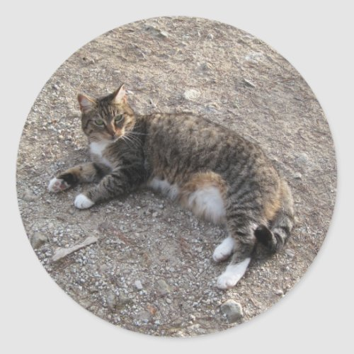 Sticker: Tabby Cat Resting Classic Round Sticker