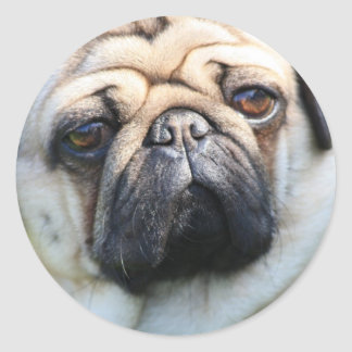Sticker with A portrait OF A pug