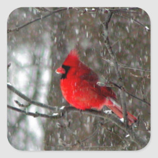 sticker with photo of male cardinal