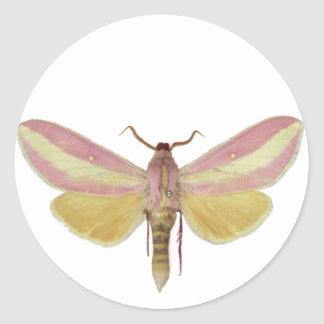 Sticker with Saturniidae moth