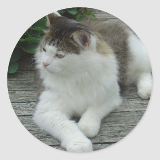 Stickers - Maine Coon Cat   Image 1