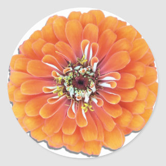 Stickers - Orange Zinnia