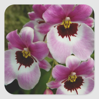 Stickers - Pansy Orchid
